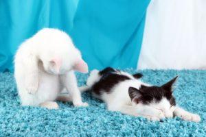 Usuwanie sierści z dywanu
